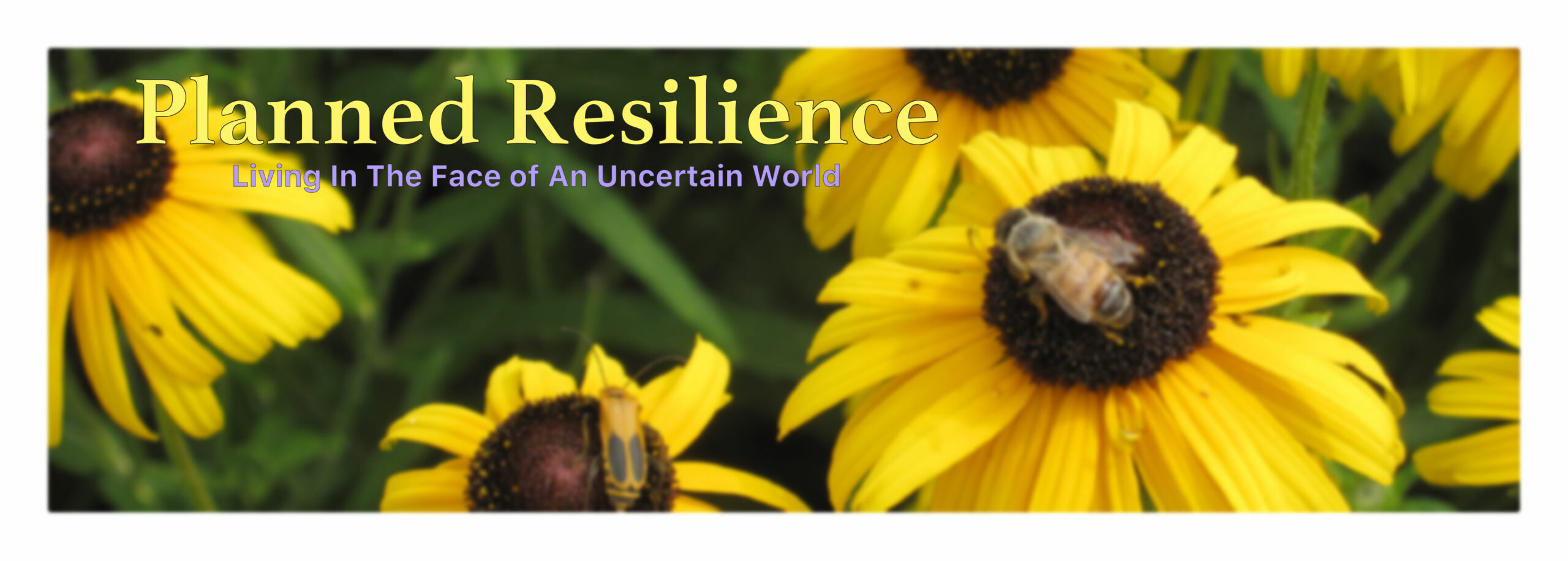 Planned Resilience
